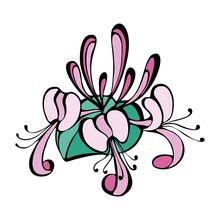 Image Of Pink Honeysuckle Blossom Flowers. Flat Vector Illustration.