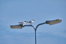 Pair Of Seagulls Perched On La...