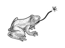 Frog Catches Mosquito By Tongu...