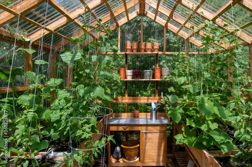 Fotografiet Interior of a wooden domestic greenhouse for growing vegetables