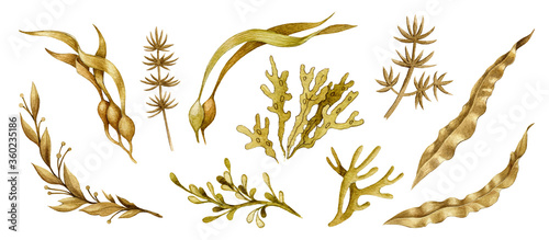 Canvastavla Seaweed hand drawn watercolor collection