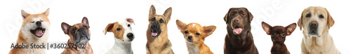 Collage with different dogs on white background. Banner design