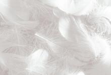 Beautiful Abstract Gray Feathe...