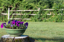 Scenic View Of Petunia Filled Planter On A Tree Stump In Front Of A Rustic Post And Beam Fence. Summer Lifestyle Concept.