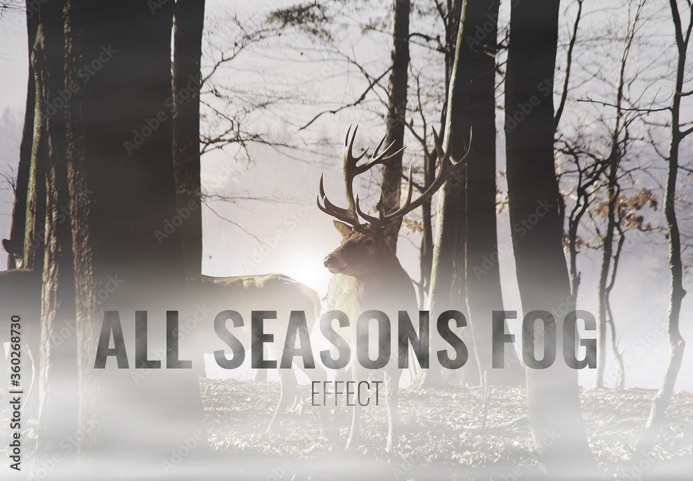 Fototapeta Seasonal Fog Effects Mockup