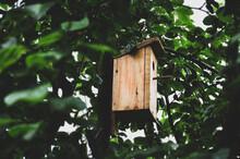 Drewniany Domek Dla Ptaków Zawieszony Na Drzewie