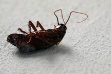 Dead Brown Cockroach On Light Grey Stone Background, Closeup. Pest Control