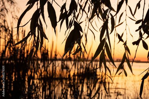 atardecer, sol, árbol, cielo, naturaleza, amanecer, paisaje, árbol, silueta, cés Canvas Print
