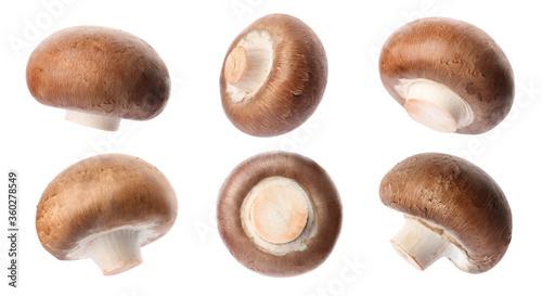 Fotografie, Obraz Set with fresh champignon mushrooms on white background