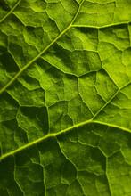 Full Frame Shot Of Fresh Green...