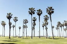 Palm Trees Growing On Grassy F...