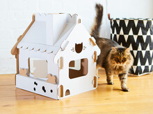 Cat In The Cat House. Shallow ...