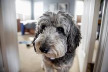 Portrait Of Dog Close Up