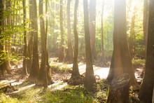Sunshine Through The Jungle
