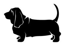 Vector Black Silhouette Of A Standing Basset Hound Dog Isolated On A White Background.