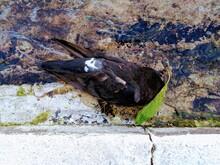A Dead Bird In The Sidewalk Ditch