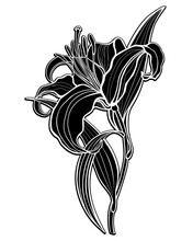 Lily. Black Silhouette Of A Large Lily Flower With Leaves And Stalk - Vector Illustration. Lily - Inverted Black And White Picture.