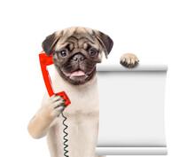 Pug Puppy Uses A Retro Phone O...