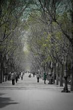 Park Scene In Beijing, China