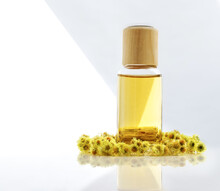 Immortelle Essential Oil With Dried Flowers Of Helichrysum. Medicinal Plant, Skincare, Anti-aging