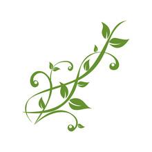 Green Plants Tendril On White Background Vector Illustration EPS10