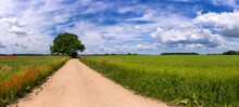 Dirt Road Between Agricultural Fields Of Latvia. Sunny Summer Bright Day. Red Poppies And Wildflowers. Panorama