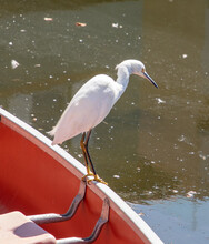White Bird Standing On Red Boat