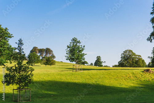 Fototapety, obrazy: The open parkland of Dallam Park on a sunny evening Milnthorpe, Cumbria, England