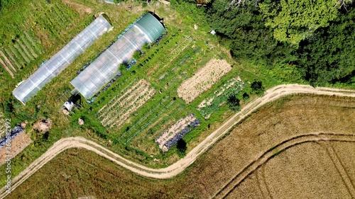 Agriculture Fototapeta