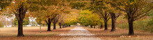 Autumn Tree-lined Country Road...