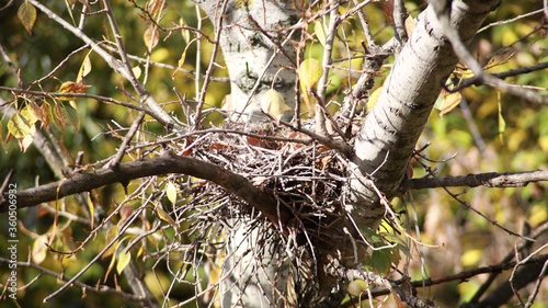 Fotografie, Tablou convolute nest on tree