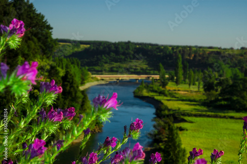 paisajes naturaleza  campo flores  pastizales bobinos   volcanes  rio Chile Suda Canvas Print