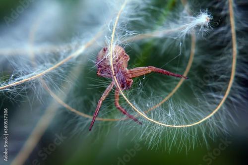 Photo spider on a spider web