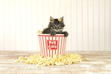 Sitting Kitten In A Popcorn Bu...