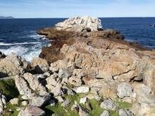 Cape Rock Hyrax, Hermanus, Sou...