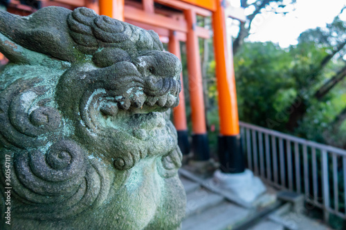 Slika na platnu Close-up view of guardian lion stone statue in Fushimi Inari-Taisha Shinto Shrine in Kyoto, Japan