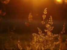 Trawa Podczas Zachodu Słońca