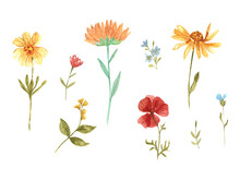 Set Of Watercolor Wild Flowers. Red Poppy, Yellow Daisy, Blue Cornflower, Sunflower. Delicate Set For The Design Of Cards, Prints And Backgrounds. Stained Glass Style
