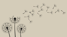 Hand Drawn Of Dandelions On The Paper Background