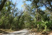 Landscape Of Florida Wild Forest