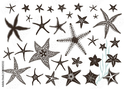 Photo Starfishes hand drawn set, big vector collection design sea stars