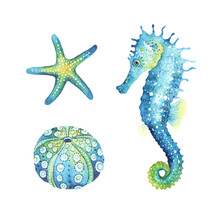 Seahorse, Starfish And Urchin Shell, Watercolor Animal Set Illustrations. Ocean Wildlife, Design Elements Isolated On White Background, Print Sea Symbols.
