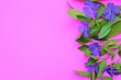 Leinwandbild Motiv periwinkle on a pink background. Place for advertising. Violet flowers and a place for an inscription or a congratulation. March 8. Wildflowers