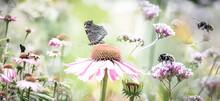 Garden With Flowers Echinacea ...