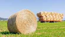A Large Round Hay Bale In A Fi...
