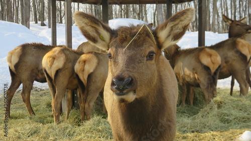 Valokuva deer