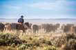 A cowboy on his horse moving cattle to an adjacent desert pasture on the ZX Ranch near Silver Lake.