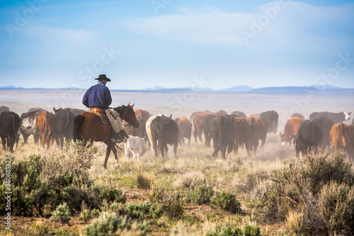 Canvas Print A cowboy on his horse moving cattle to an adjacent desert pasture on the ZX Ranch near Silver Lake