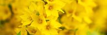 Background Of Bright Yellow Fl...