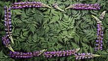 Frame Of Large Blue-violet Lup...